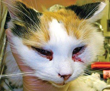 Cat Eye Pink Discharge