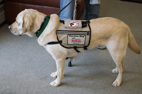 service dog in Houston Heights