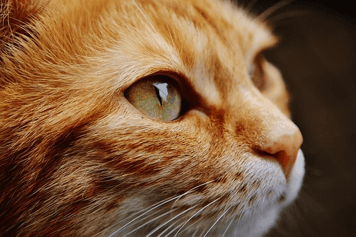 cat infections and diseases