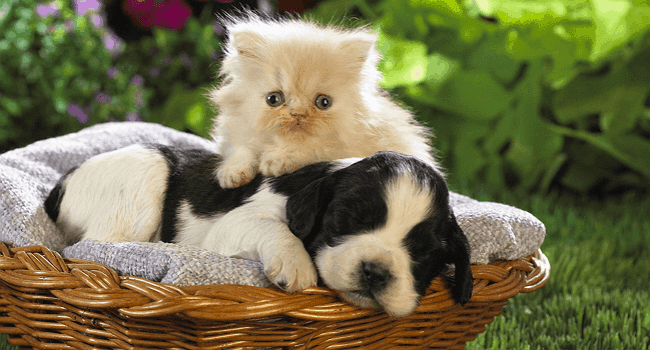 pet animal bacteria infections