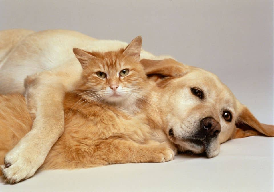 dog and cat seizures