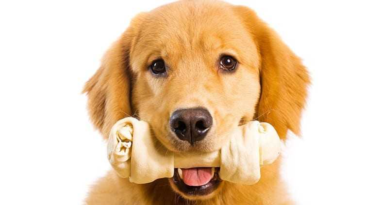dog bones
