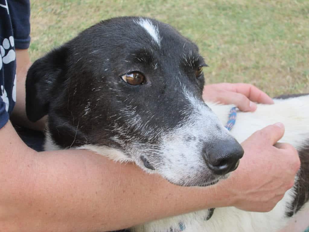 CLOSTRIDIUM DIFFICILE in dogs