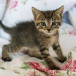 Orphan Puppy & Kitten Care