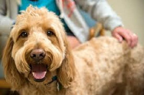 fluid therapy in pets