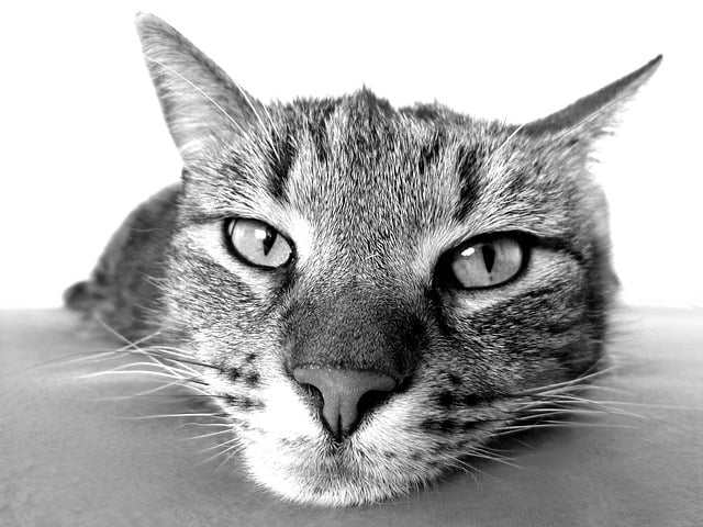Subcutaneous to Dogs and Cats
