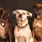 Steroid Use in Dogs and Cats