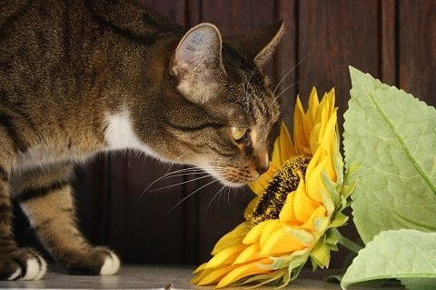 cat smelling garden flowers