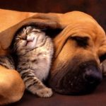Where to Look Online for Reliable Veterinary Care...