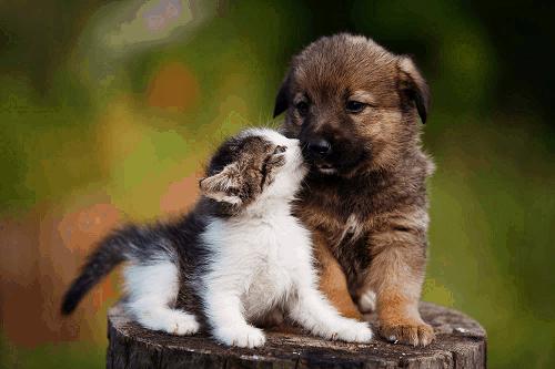 puppy socializing