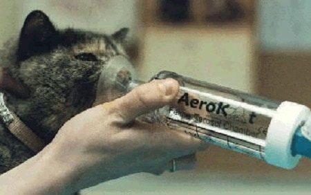 cat feeding