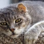 Senior Cats' Health Issues
