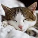 Infiltrative Bowel Disease in Cats (IBD)