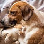 Managing Arthritis in Dogs and Cats