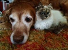 dog and cat with arthritis
