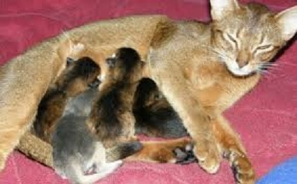 Parasitism in Companion Cats and Dogs