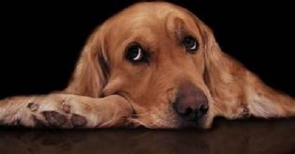 Bloody Diarrhea in Dogs (called AHDS or HGE)