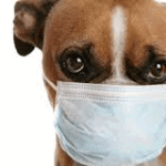 What You Should Know About Coronavirus for Your Family and Animal Companions