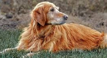 Neuropathic Pain in Companion Dogs and Cats