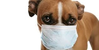 What You Should Know About Coronavirus for Your Family and Animal Companions (Taken from the website of the American Veterinary Medical Association)