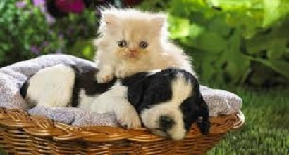 Biting Puppies and Kittens