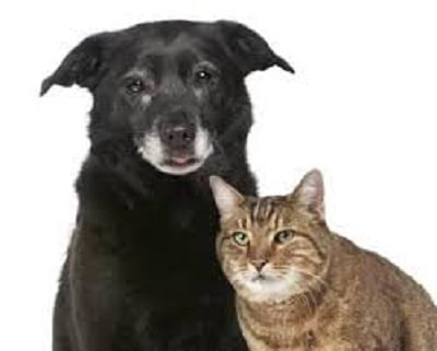 Neuropathic Pain in Dogs and Cats