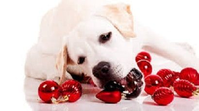 holiday hazards to avoid for pets