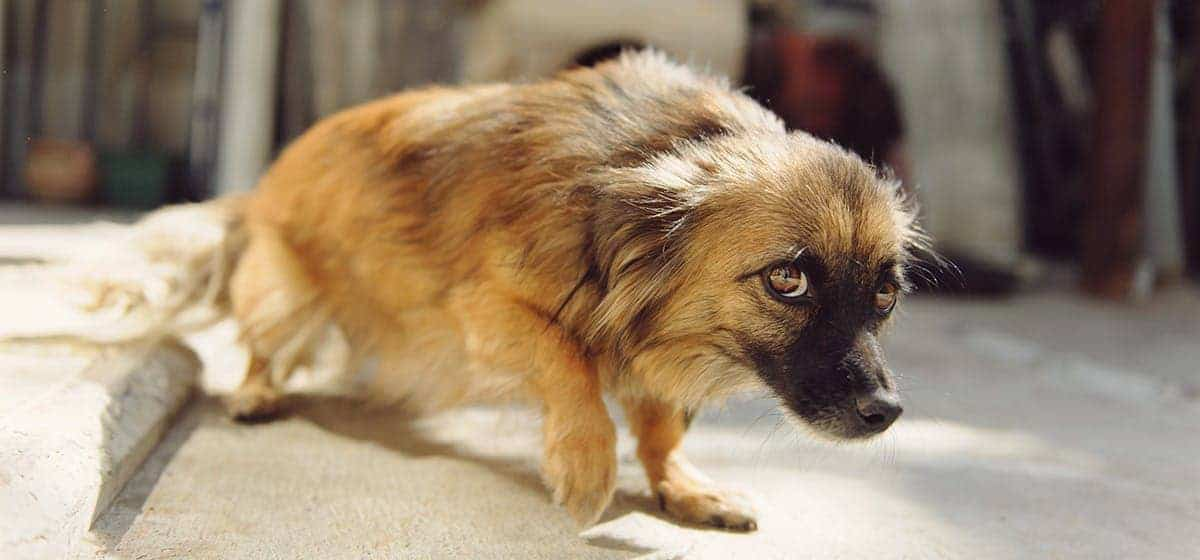 Dogs Need to See a Veterinary Behaviorist - dog lowering its head in fear
