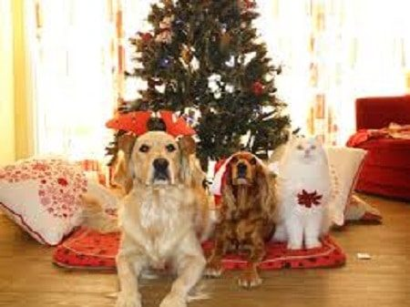 holiday hazards for cats and dogs