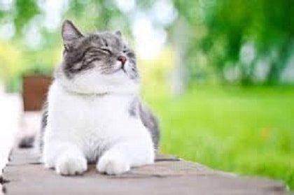 Body language in Companion Cats