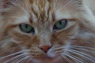 Evaluating cat Health Through Blood Work
