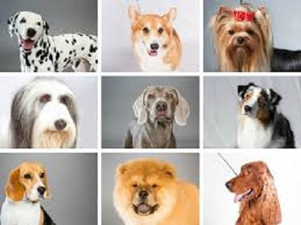 THINGS TO CONSIDER BEFORE BREEDING YOUR DOG