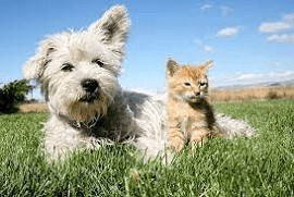dog and cat with stomach worms