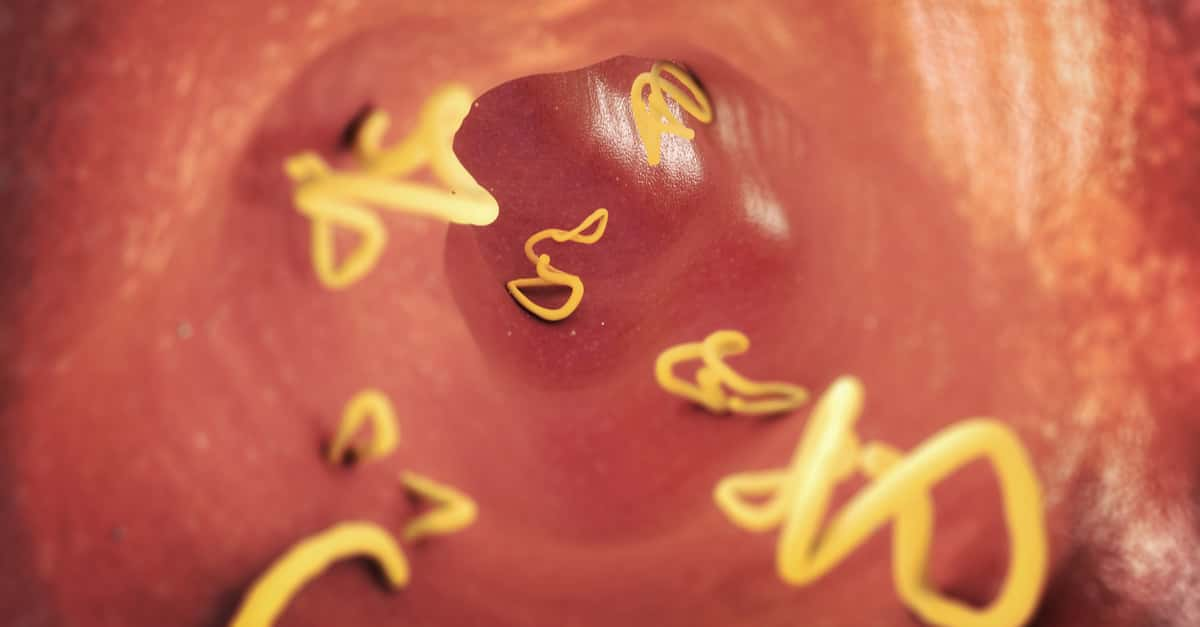 Stomach Worms in Cats and Dogs