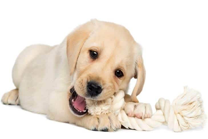 Toys that are Safe for Your Puppy