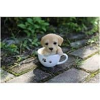 small puppy in teacup