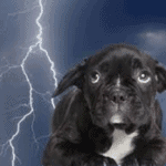 Thunderstorm Anxiety in Dogs