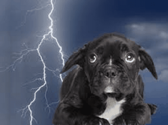 Thunderstorm Anxiety in Dogs treatment