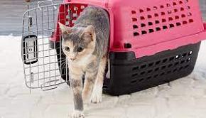ventilated carrier for kitten