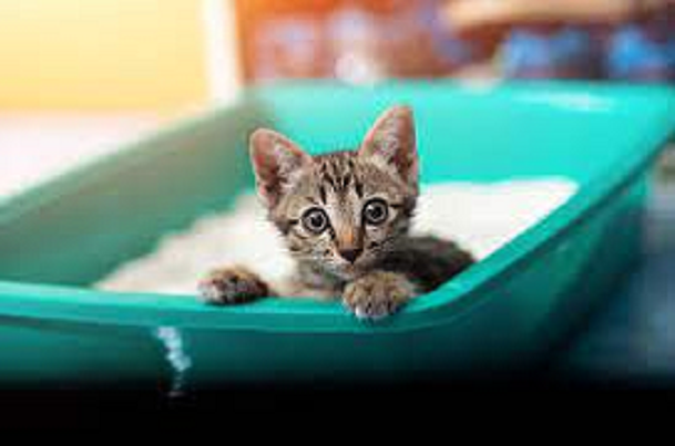 things to know before getting a kitten