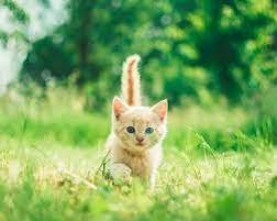 outdoor kitten