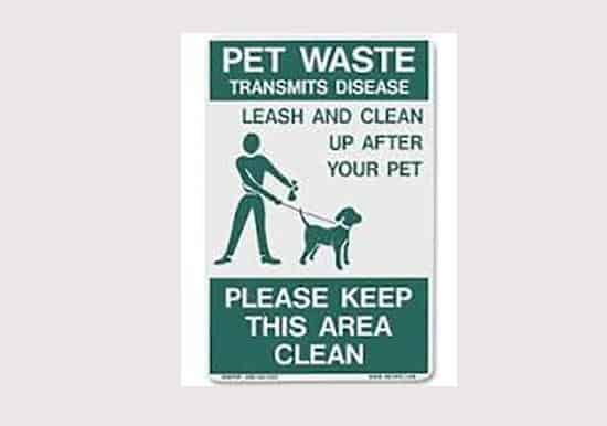 why dogs eat cat feces