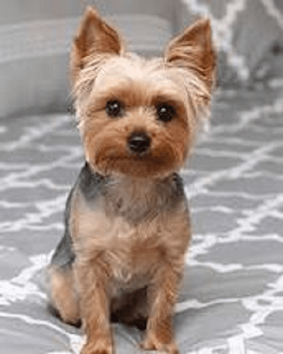 Acute Hemorrhagic Gastroenteritis in dogs
