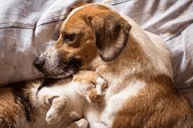 cat and dog managing their arthritis